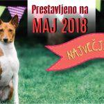 NAJVEČJI KUŽKOV FESTIVAL – PRESTAVLJEN NA MAJ 2018