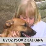 UVOZ PSOV Z BALKANA – RTV SLO, oddaja Tednik, 21. 5. 2018