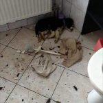 PETICIJA: Zaporna kazen Tomažu Vrečar zaradi mučenja kužka