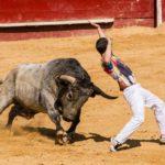 CORONA VIRUS V ŠPANIJI SAMO MARCA OHRANIL PRI ŽIVLJENJU 120 BIKOV